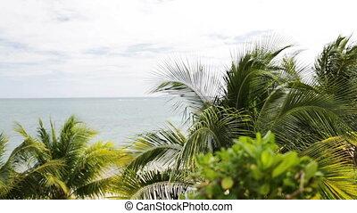 tropical beach with palm trees - beach, nature, sea, summer...