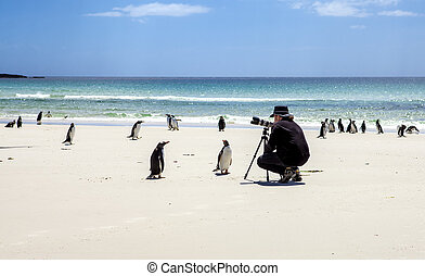 Photographer with penguins at Falkland Islands-2 -...