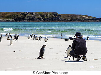 Photographer with penguins at Falkland Islands-3 -...