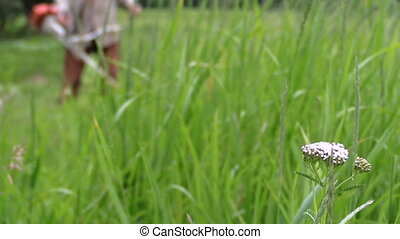 meadow man cut trimmer - foreground focus tall green meadow...