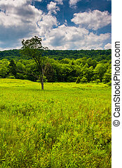 Meadow and trees at Canaan Valley State Park, West Virginia