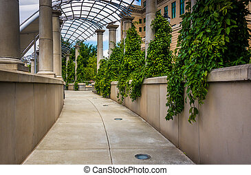 Foliage hanging along a walkway at Pack Square Park in...