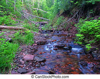 Riffles of Jacobs Creek in the dense forests of northern Michigan.