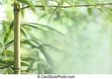 bamboo background - bamboo leaves and twigs with blurred...