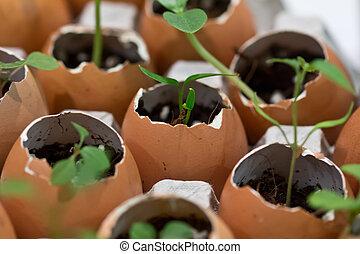 Environmentally friendly plant pots - Array of eggshells...