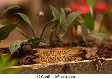 Mandrake plants from Harry Potter in a miniature recreation