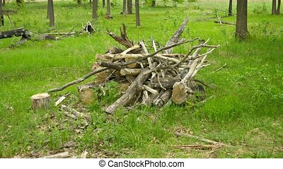 Pile of oak wood on the forest floor - UHD video - A pile of...