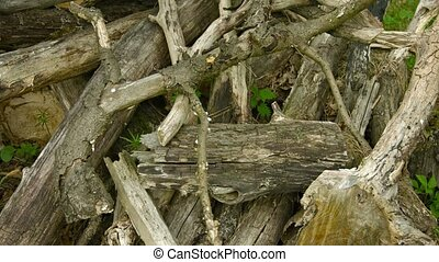 Pile of rotten wood in an oak forest - UHD video - A pile of...