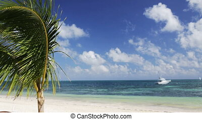 tropical beach with palm tree and boat on water - vacation,...