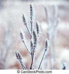 surgelé, Usines, hiver, fond