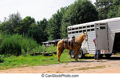 all tacked up - a horse all tacked up standing by his...