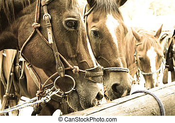 ready to ride? - horses at a hitching post