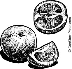 grapefruit - Vector illustration of a grapefruit stylized as...