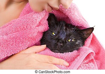 Cute black soggy cat after a bath - Woman holding Cute black...