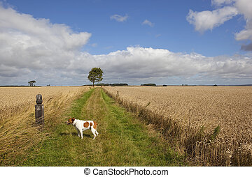 tired dog on a long distance footpath - a tired dog looks at...
