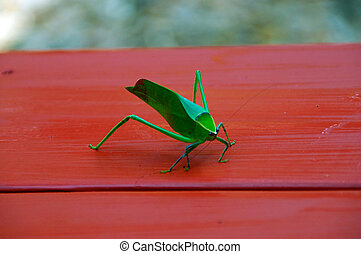 katydid on table - A large green katydid grasshopper on red...