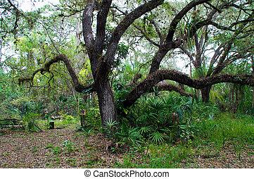 large oak tree in winter