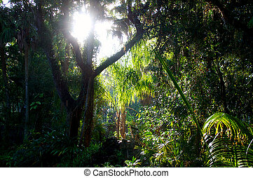 sunlight in subtropical forest