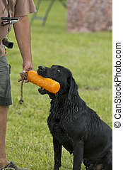 Hunting dog at heel - Training a hunting dog