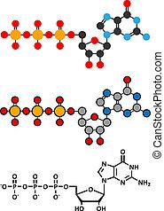 Guanosine triphosphate (GTP) RNA building block molecule....