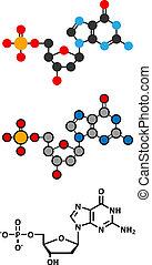 Deoxyguanosine monophosphate (dGMP) nucleotide molecule. DNA...