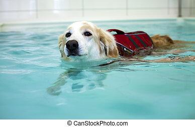 Dog Swimming in Swimming Pool