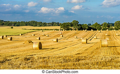 Hay bales rolled and ready for action