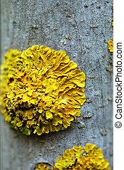 tree fungus - Macro of tree branch with yellow moss fungus....
