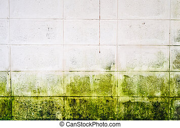 Mold growth and water stains on the ceiling of an abandoned...