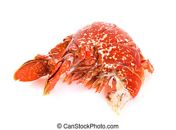 Lobster tail - Tail of a Cooked European Common Lobster...