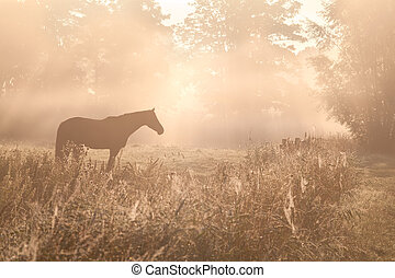 horse sulhouette in foggy sunshine at sunrise