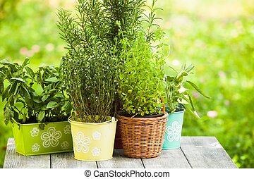 Herb garden - Cozy home garden with herbs - rosemary, sage,...