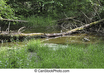 forest pond - Image of the brushed forest pond