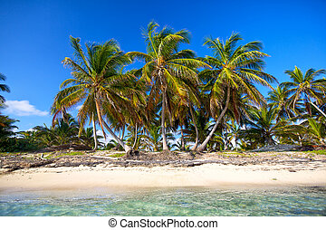 Palm beach - Palm trees on untouched tropical beach,...