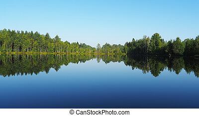 forest lake. karelia