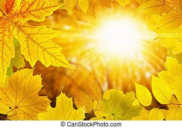 Fall background - Beautiful nature autumn background -...