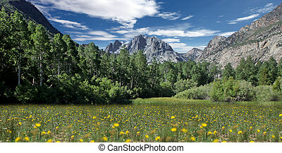 Field of Flowers in the Eastern Sierras