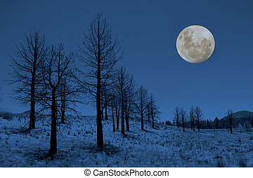 Moon and Trees in the Sierras - Moon and Trees in the Sierra...