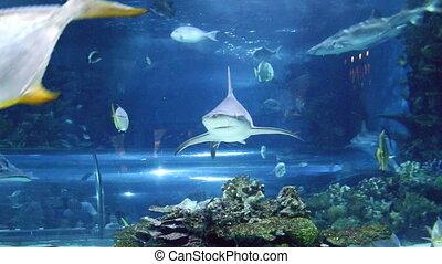 shark and fish swimming underwater
