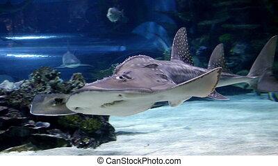 shark swimming underwater closeup