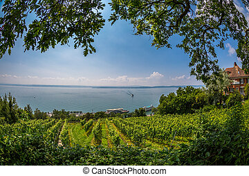 View over Lake Constance - Views over the vineyards of...