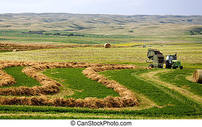 Farming Saskatchewan bales and baler in field swathe
