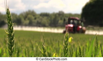 wheat plant fertilize - Wheat plants move and blurred...