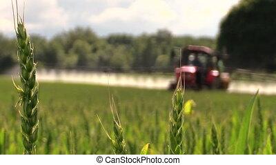 wheat plant fertilize