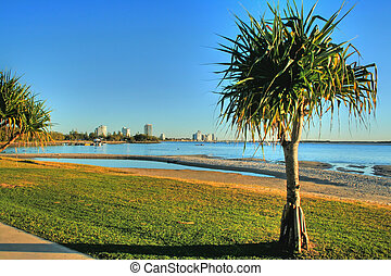 Pandanus Tree - View looking to Labrador on the Gold Coast...