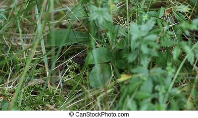 Finding a Grass Snake - Explorer finds a litlle grass snake...
