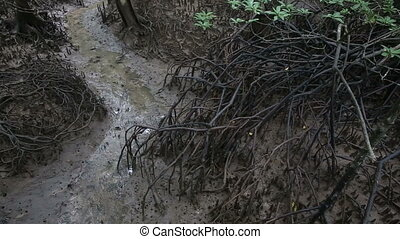 stream flows of the root system of mangroves on a cloudy day