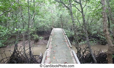 bridge over a stream in the mangroves on a cloudy day