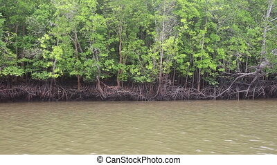 boat floats on the river of mangroves - Thai boat floats on...
