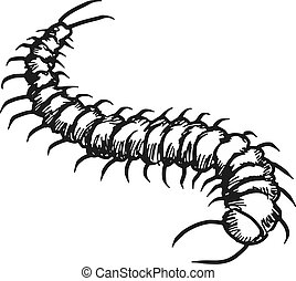 centipede - sketch, doodle illustration of centipede